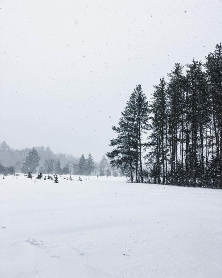 winter blues 1   roottoskykitchen.com